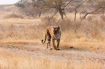 Parambikulam Tiger Reserve, Kerala – Southern India