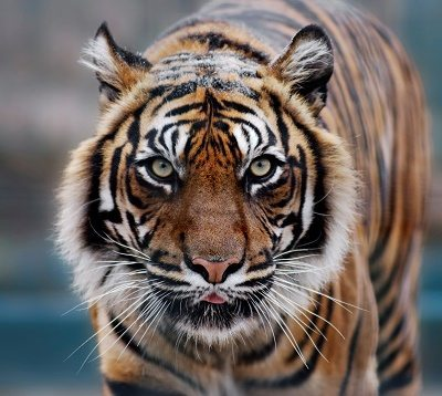 Parambikulam Tiger Reserve, Kerala - Southern India 5
