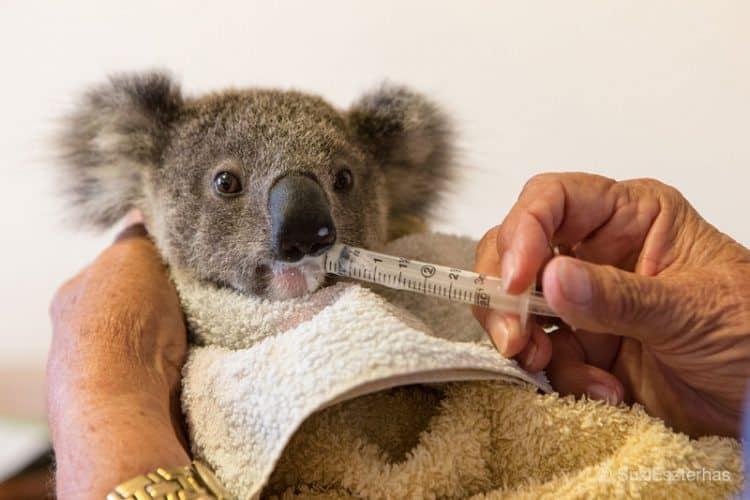 KoalaHospital