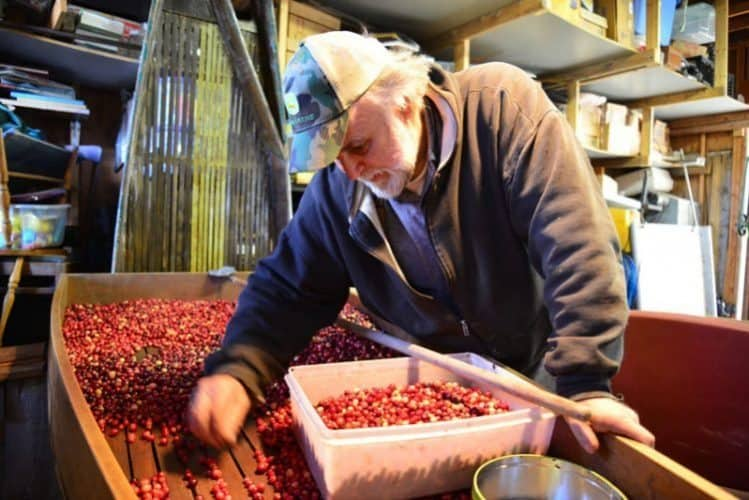 Learn about the 12 month operation of a cranberry bog from owner and operator Leo Cakounes.