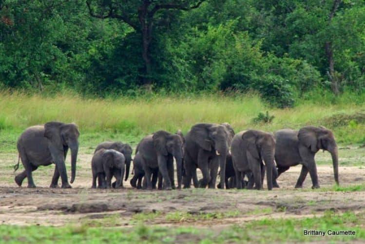 A herd of elephants approaches Kazuni Safari Lodge, Malawi.