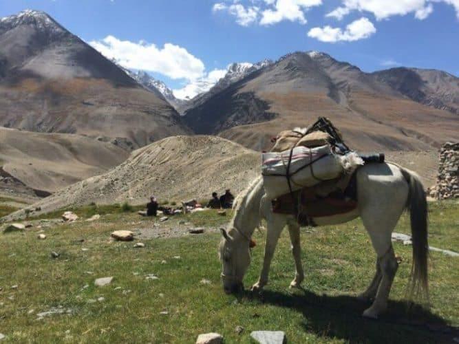 A horse takes a lunch break in Afghanistan's Wakhan, a narrow strip of land separating Pakistan from Tajikistan. Bernadine Mynott photos.
