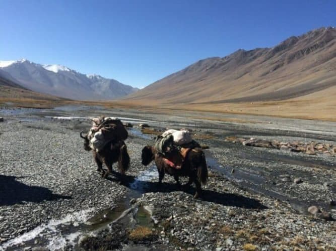 After the toughest day of the trek, the yaks recover with a short day near Nauabad, with a lot less food to carry as they near the end of the trek.