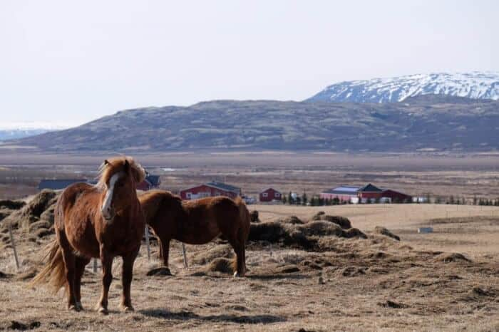 Three Easy Day Trips from Reykjavik, Iceland 4