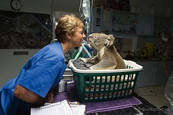 Koala Hospital Wildlife Rescue: Suzi Estzerhas