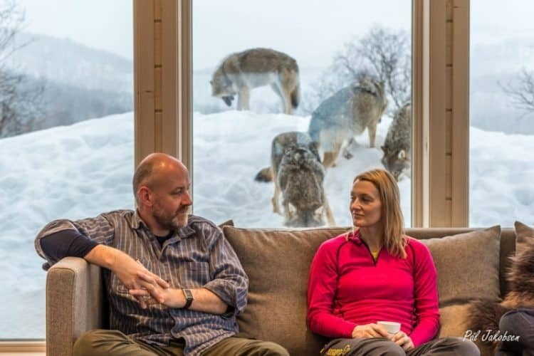 Visitors sit in the cozy living room and the wolves roam outside the windows. Photo by Pal Jakobsen