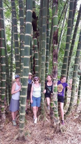 Making our way through the bamboo forest on the way to the village. Carol Antman photos