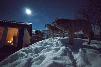 Dances with Wolves in Narvik, Norway