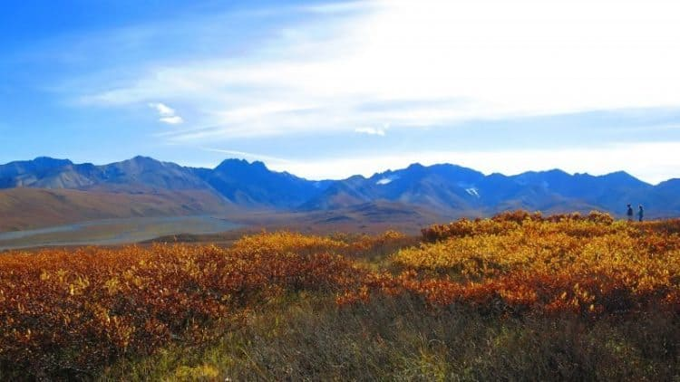 The Polychrome Overlook at mile 46 in Denali National Park (Photo by Shelley Seale)
