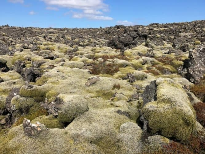 Lava fields surround the town of Grindavik and its tourist attractions, the Blue Lagoon and the Grindavik Golf Course.