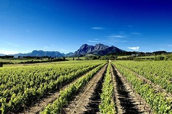 South Africa's Wine Route: Cape Route 62