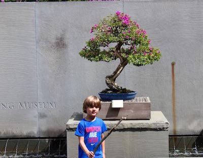 Boy and Bougainvillea in the bonsai area