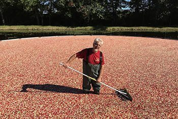 Cape Cod's Cranberry Lands in Southern Massachusetts