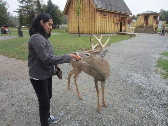 Feeding a carrot to a deer at Parc Omega Canada.