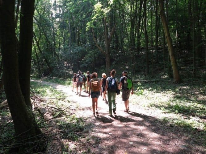 In the Grunewald forest, within the Berlin city limits, hiking trails invite both locals and tourists. Ryan Hellyer photo.