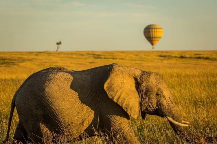 Hot air balloon safari. photo by Africa Tours