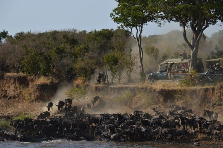 The Wildebeest migration is a stunning display that author Karen Blixen also saw when she lived in Kenya.