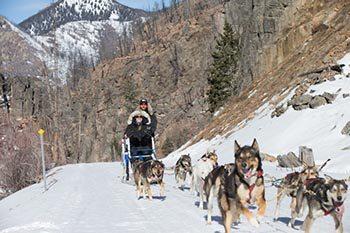 Dogsledding Adventures in Montana