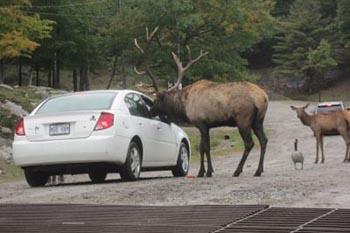 Parc Omega: A One-of-a-Kind Canadian Safari