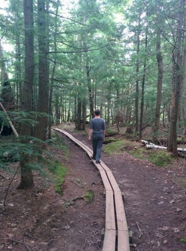 Walking through the woods in the Porcupine Mountains, in the UP.