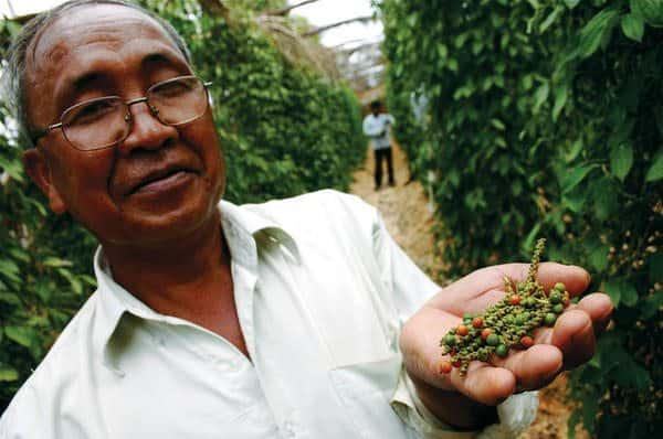 You can visit pepper farms in Kampot, Cambodia for some of the world's hottest peppers and locally made salt.