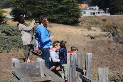 Seal watchers at North Sonoma Coast