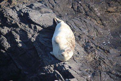Winking seal at The Sea Ranch