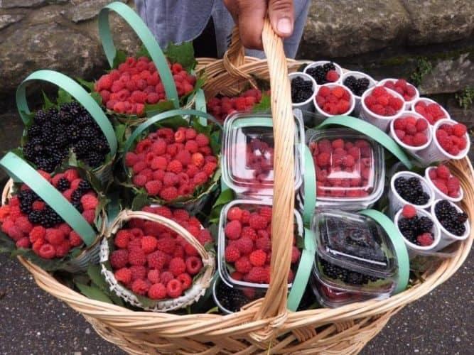 Local bounty in rural Romania.