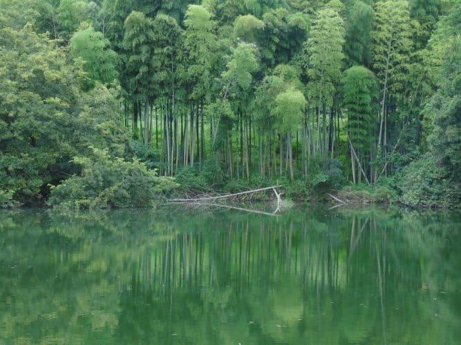 Bamboo forest en route to Ishite-ji 51 near Shikoku island in Japan. Robin Kish photos.