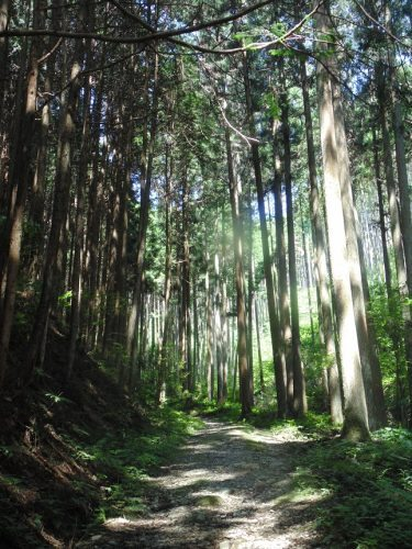 Trail from Iwaya-ji to Jodo-ji