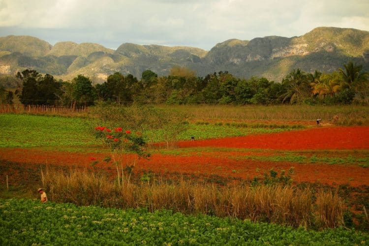 Farmland around Vinales.