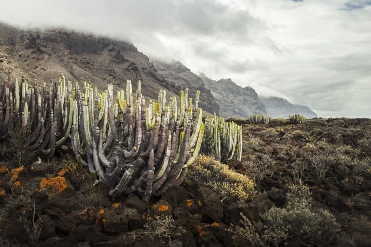Tenerife: Discovering the Adventurous Side