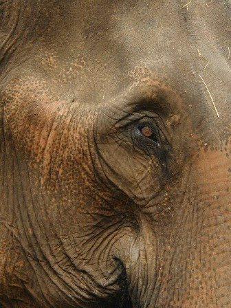 An elephant's eye.