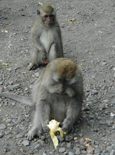 A monkey in Bali, Indonesia.