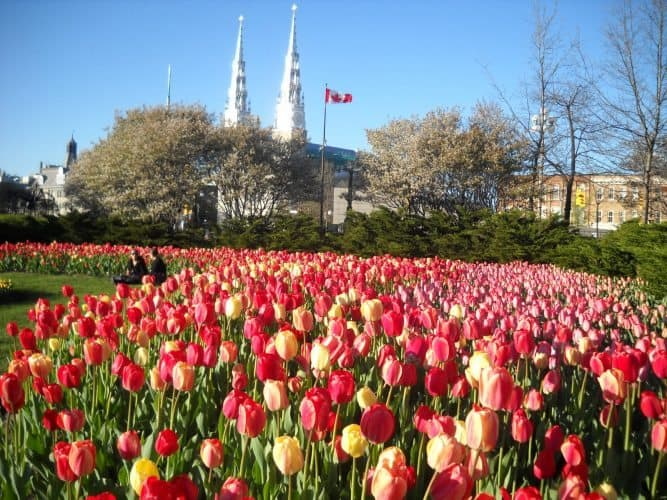 The Canadian Tulip Festival means Spring in Ottawa is in full bloom.