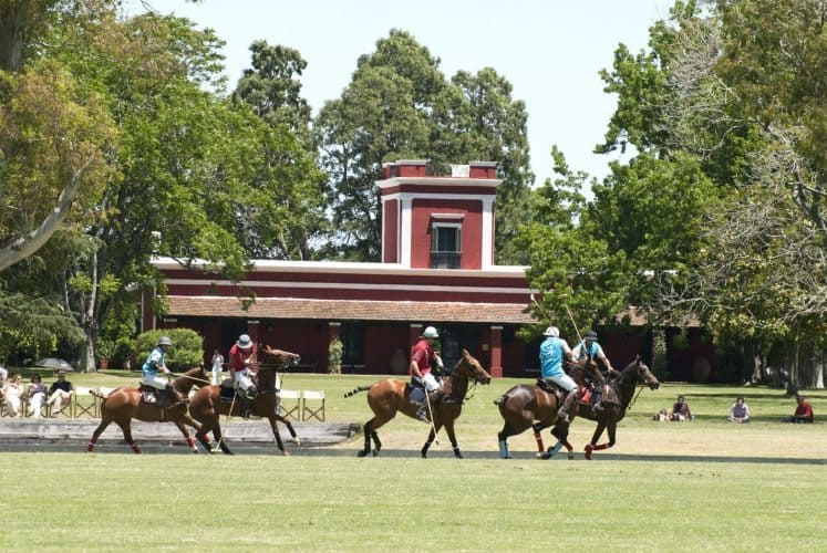 Polo ponies enjoying a game at La Bamba, an estancia in the pampas of Argentina.