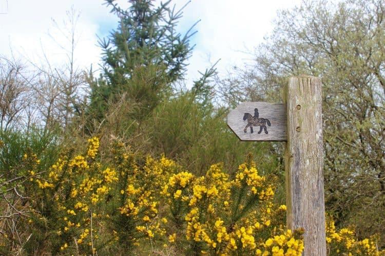 Public Pathway_Foel Drygarn, in Wales.