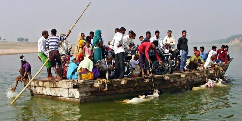 This state line ferry crossing includes swimming cows destined for a cattle fair near the banks of India's Chambal River, the border between Uttar Pradesh and Madhya Pradesh