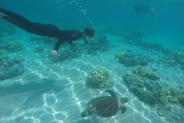 While snorkeling on the Great Barrier Reef, you are welcomed into the home of countless marine creatures.