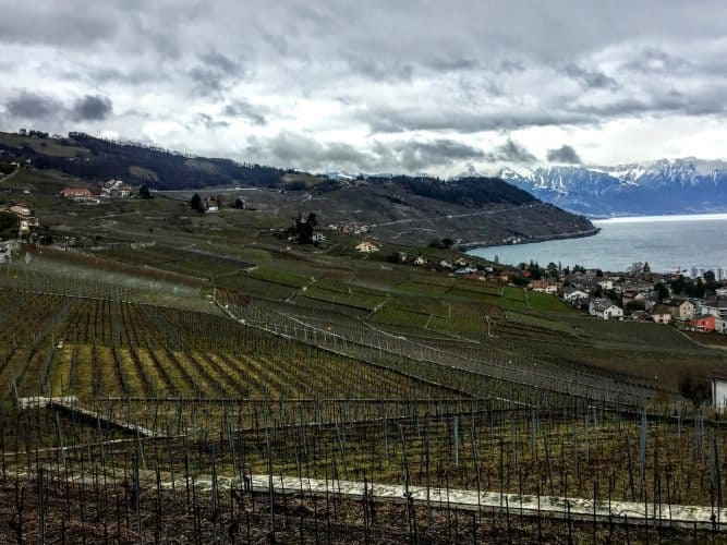 Vineyards in Lavaux, Switzerland.