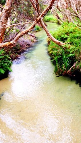 Eli Creek is a special place on Fraser Island.