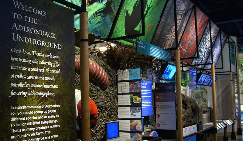 Learn about the creepy crawlers and wild animals that find safe haven at The Wild Center Museum.