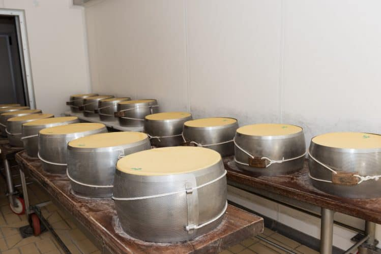 Drying the cheeses before aging.