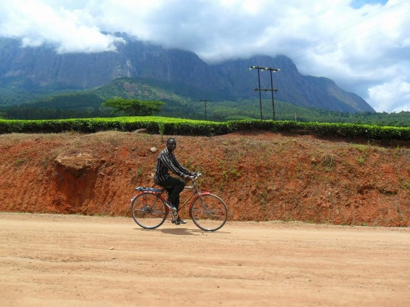 A passing man on a bicycle in front of Mount Mulanje and the tea fields.
