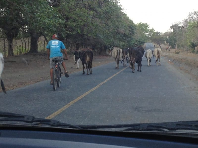You never know what might be in the middle of the road in Nicaragua.