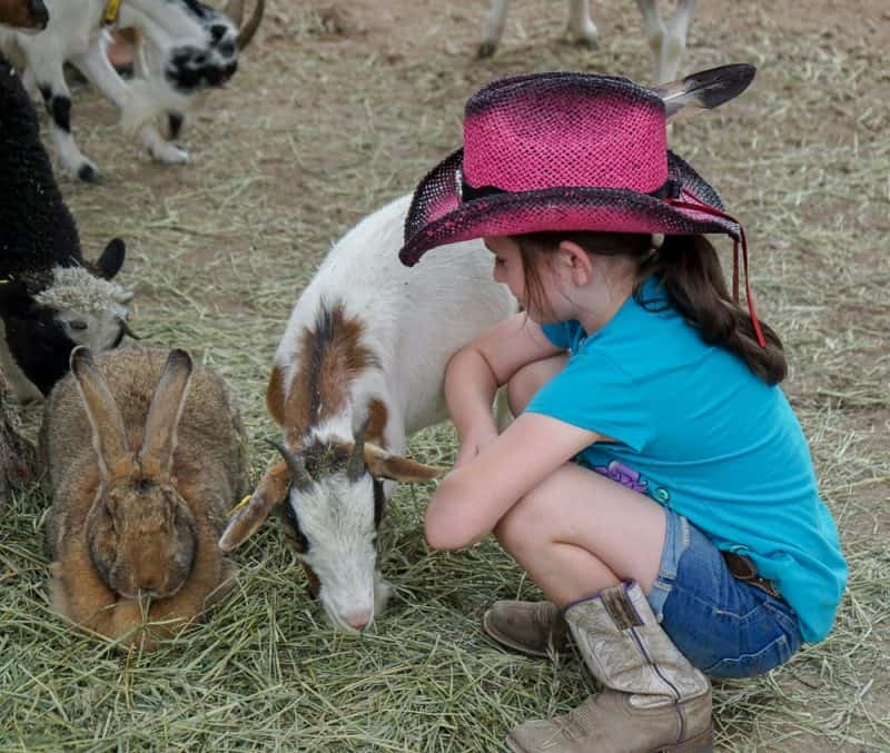 A little girl visiting with baby animals.