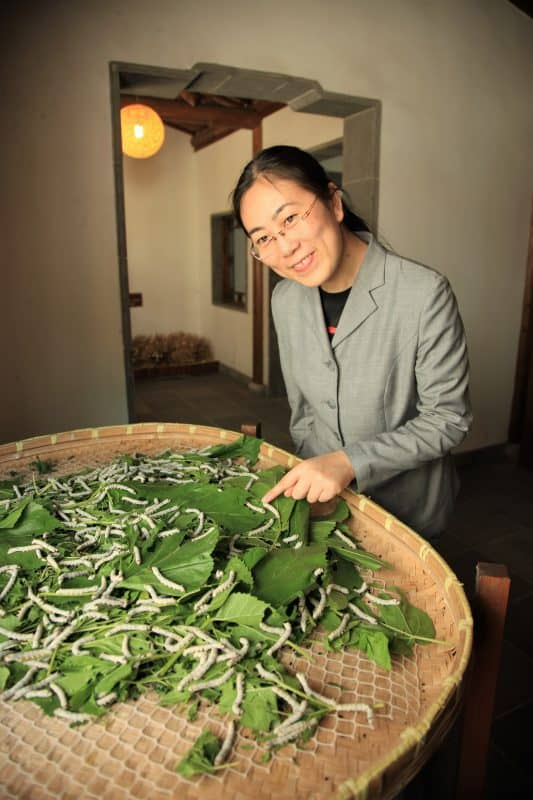 Silk worms at a silk factory in Suzhou.