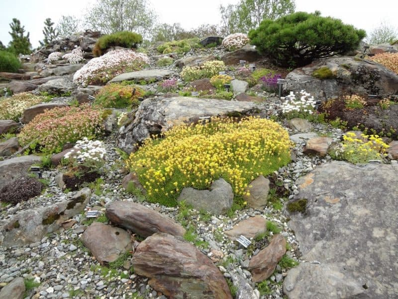 Arctic-Alpine Botanic Garden is located on the Tromso University Campus grounds.