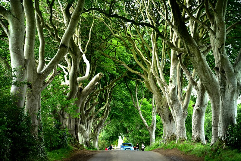 "No surprise, the Dark Hedges of Northern Ireland has appeared in the ""Game of Thrones"" series."