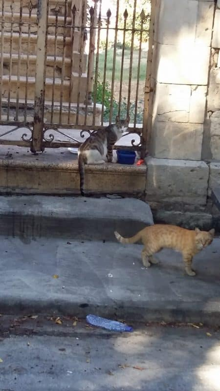 Only cats can get through the wall in Cyprus.